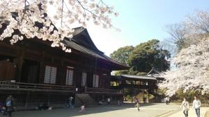 桜と比翼入母屋造り